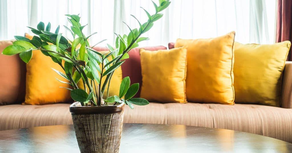 Plantas amenizam temperatura de apartamentos