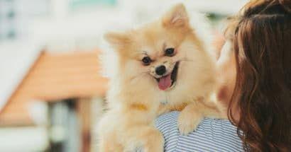 Espaços para Pets: Condomínios garantem diversão companheiros